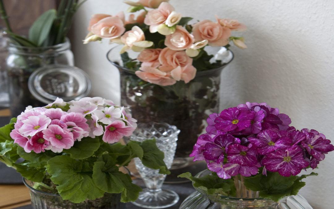 blommande växter inomhus