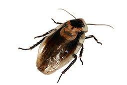 Jag har en massa små flygande insekter som kommer in i
