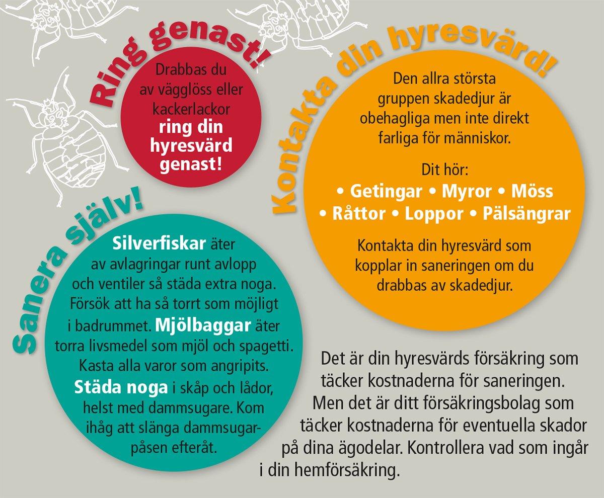 Grafik om olika typer av ohyra