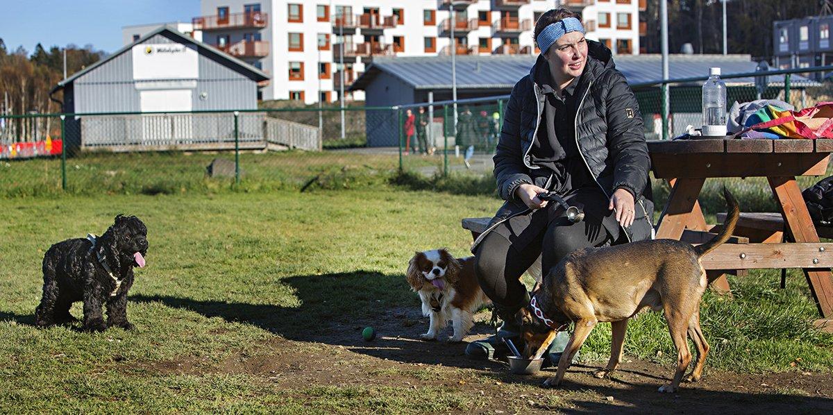 Johanna Månsson i hundrastgården med tre hundar runt sig.