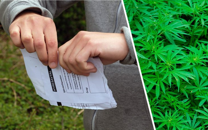 cannabis-730x456.jpg