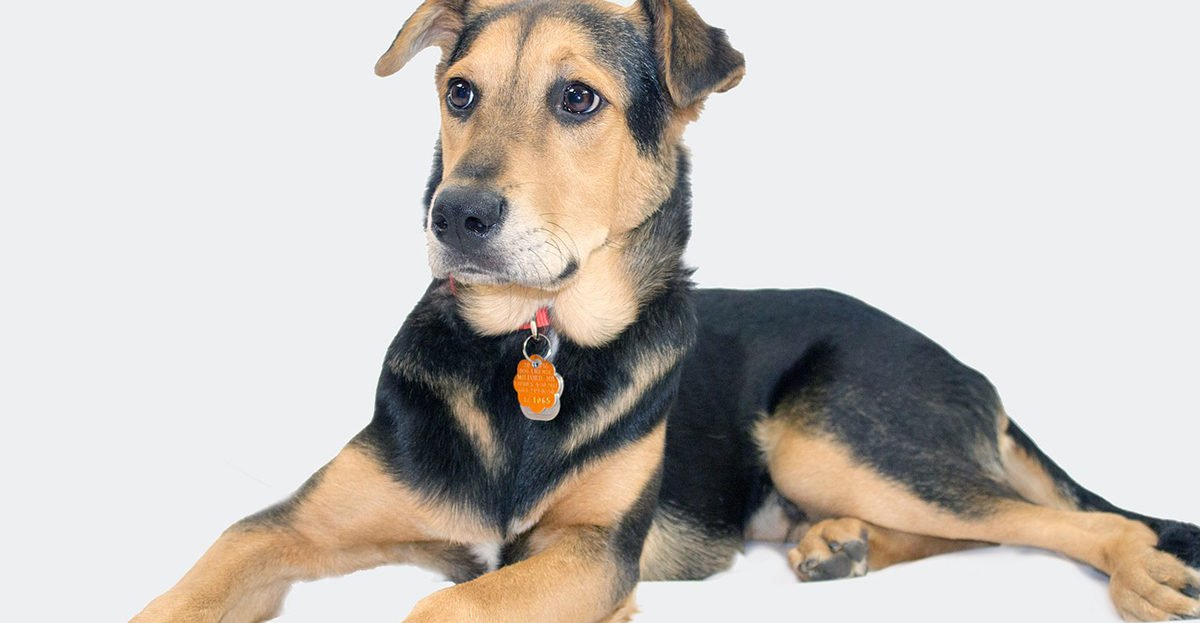 Vanligaste hundnamnet i Sverige är Molly. I Borås ska rasen helst vara en schäfer.