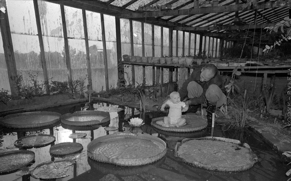 Folknöje på 1950-talet. Under mitten av 1900-talet startade Bertil Andersson den handelsträdgård som han drev fram till sin död 2011. Bilden är beskuren.