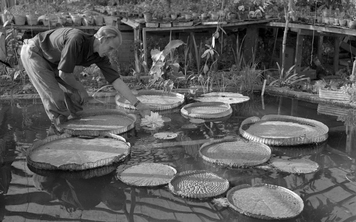 Bertil Andersson i handelsträdgården på Kävlingevägen år 1953. Bilden är beskuren.