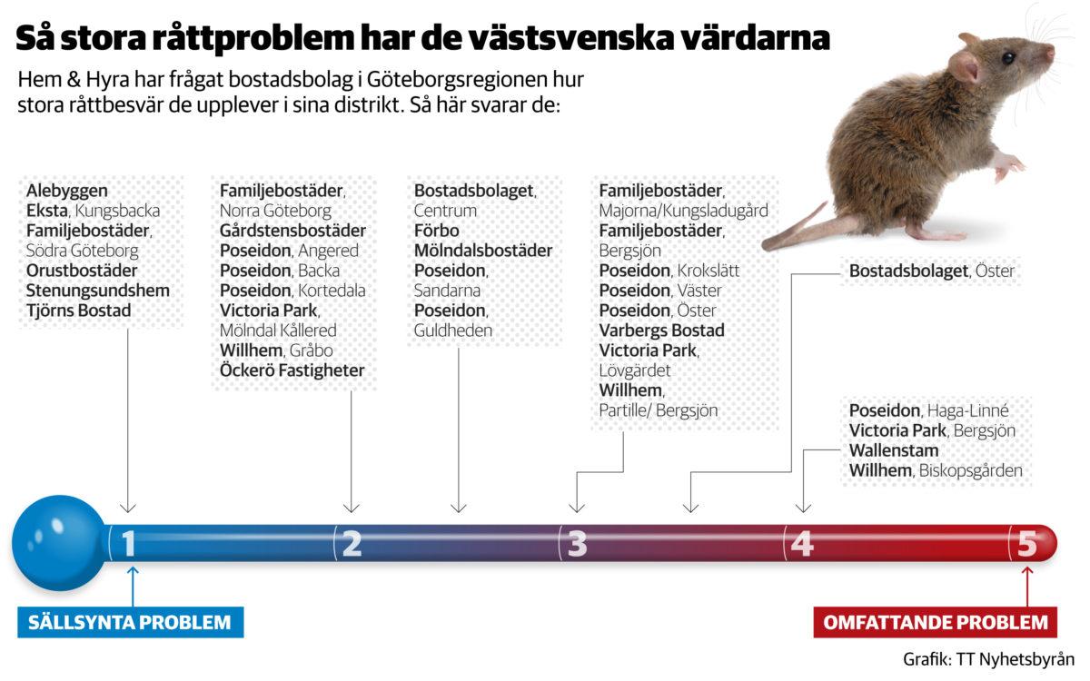 Grafik som visar råttor i olika bostadsområden i Göteborg